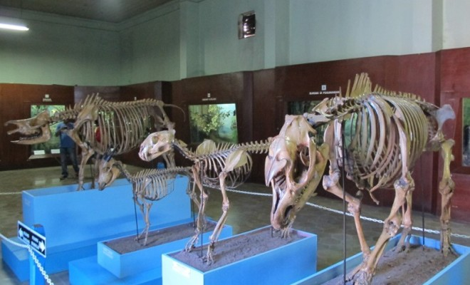 091343_museumbogor2
