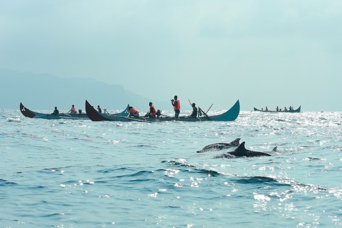 dolphin-teluk-kiluan-nationaljourney