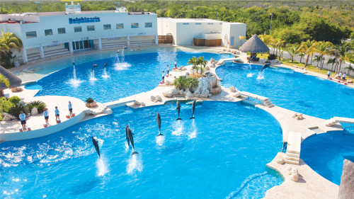 swim-with-dolphins-cancun
