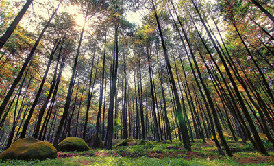 Wisata-Gunung-Pancar-Bogor