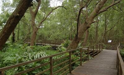 hutan-bakau-pantai-indah-kapuk