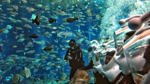 Bali-Sea-Walker-bali-tour5