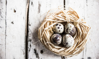 Eggs: Quail Egg - Stock image